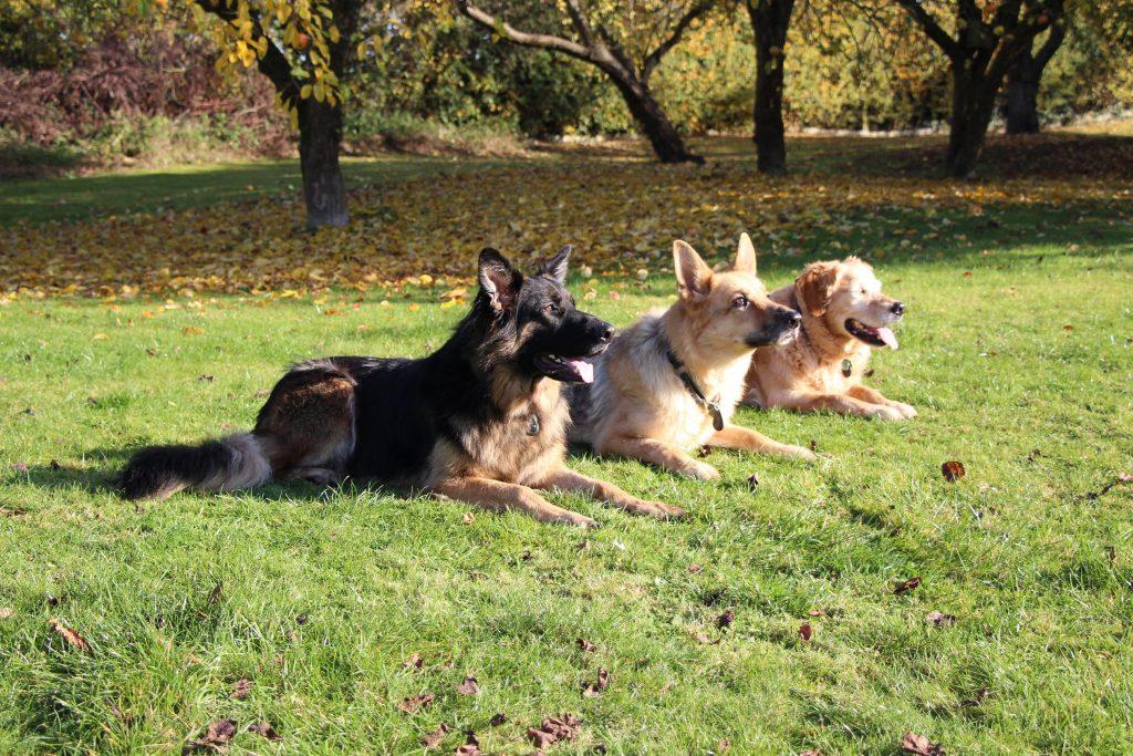 Dogs wearing e-Pendants